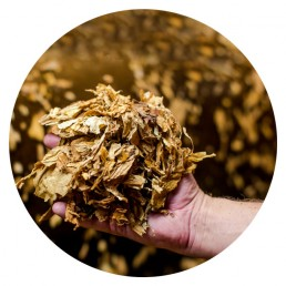 man holding dried tobacco