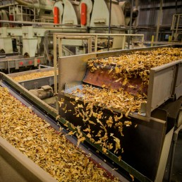 tobacco being processed